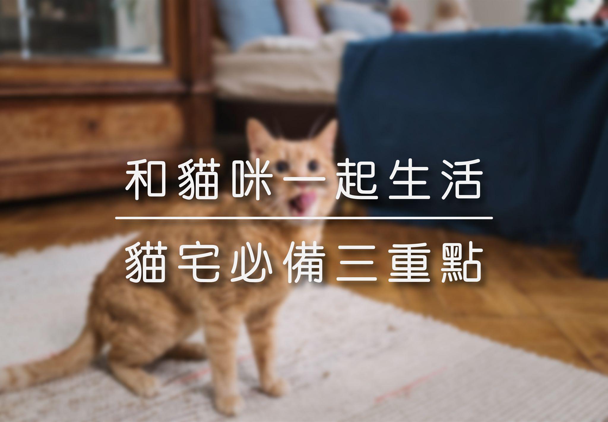 和貓咪一起生活 | 貓宅必備三重點